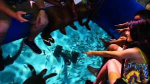 Ripley's Aquarium of Myrtle Beach Launches Brand New Glass Bottom Boat Adventure